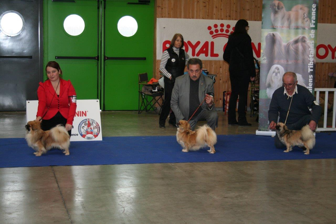 Cedia Dog Shows