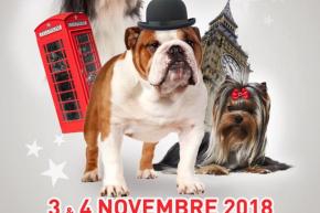 La spéciale chiens tibétains du samedi 3 novembre